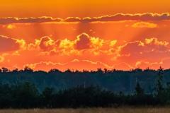 W poszukiwaniu Łosia - przed wschodzem słońca