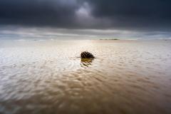 Co morze wyrzuci